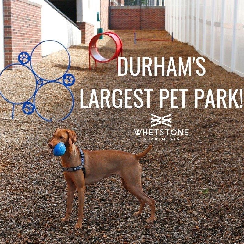 Durham Academy In Durham, NC